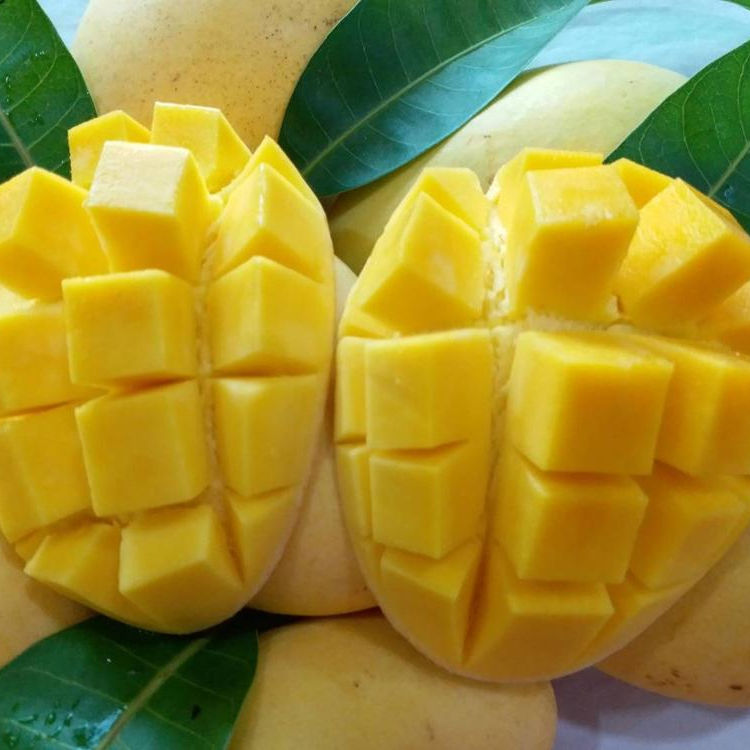 AYAME Thai Premium Fresh Sweet Mango From Thailand