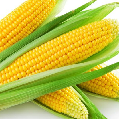 Canned Sweet Corn Kernel Yellow Corn