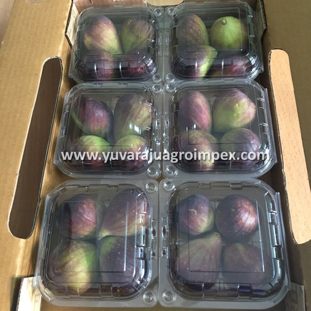 Fresh Fruit Figs Supplier in India/What's app no: +91 9626993222