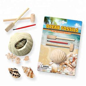 Fossil Graben Aktivität DIG UND FINDEN! Ozean Sea Shell Dig es Heraus Ausgrabung Kit