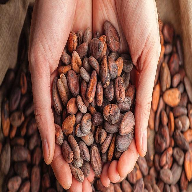 Quality Dried Cacao Beans / Cameroon Cocoa- Beans