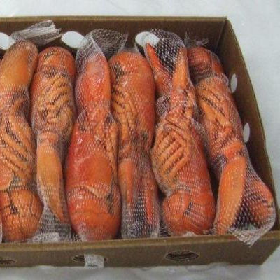 Fresh Quality Pacific Canadian Red Lobsters for sale