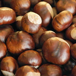 100% Top quality fresh chestnuts/organic chesnuts