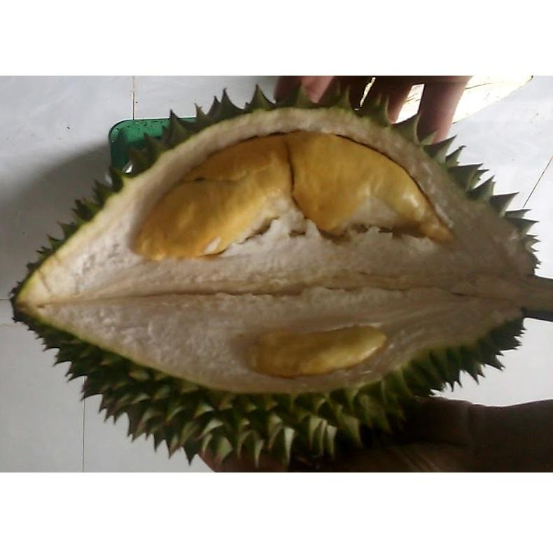 Durian Flavor Fresh Fruit Organic Brand Name Ri6 Tan Son Nhat Port From Dinh Gia Company