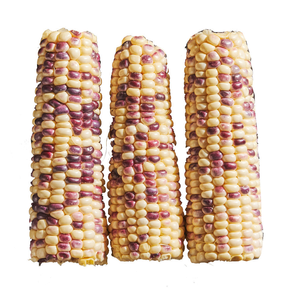 VIETNAM 100% ORGANIC FROZEN COOKED VIOLET CORN GOOD FOR HEALTH WITH BEST PRICE
