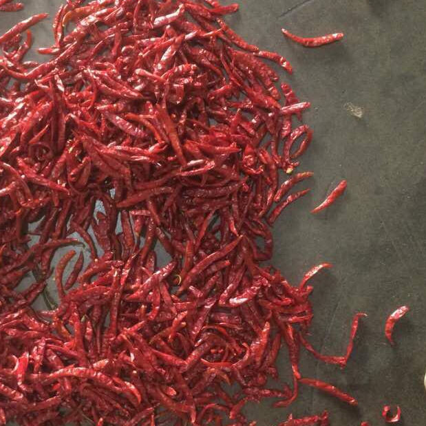 Good Price Indian Wholesale specification Dry Pepper Red hot slimming Chilli Dried Red Chili