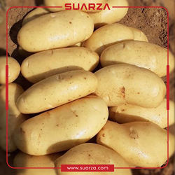 New Crop Fresh Holland Potato from Pakistan