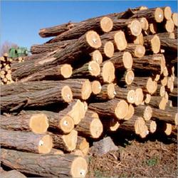 Buy Iroko Wood Logs/ Sawn Timber At the Most Competitive