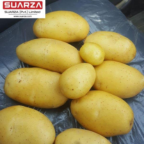 2020 fresh sweet potato price suppliers