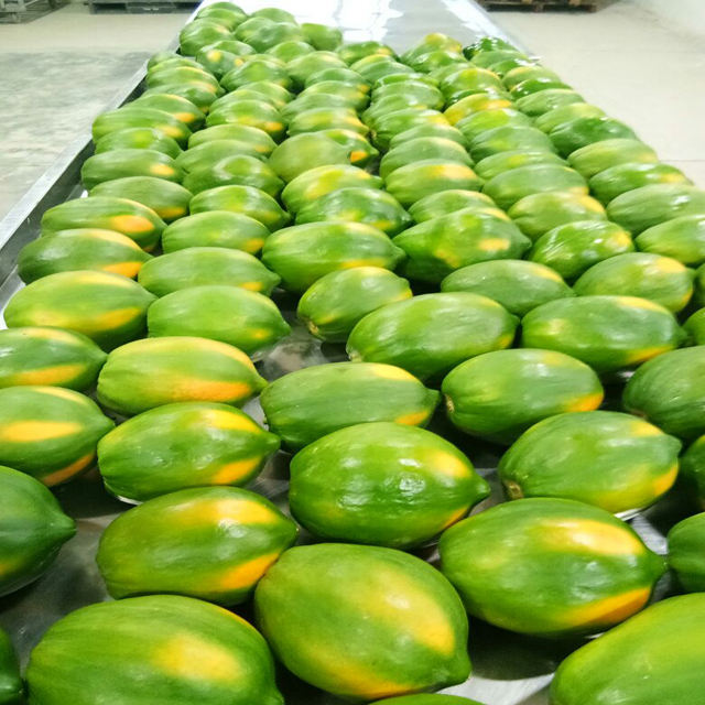 Papaya Fruit Supplier from India to Japan / China / Russia / German / France