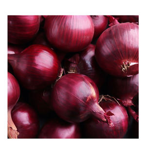 Premium Quality Fresh Onion At Lowest Rate