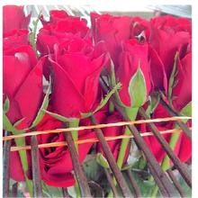 Tajmahal South Africa  Roses/Valentine Red Roses/Fresh Cut Flowers!