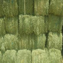 Premium Quality Alfalfa Hay at very cheap price / Quality Rhodes Grass Hay