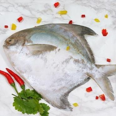 Indonesian Freshly Frozen Fish High Quality Silver or White Butterfish Meaty Whole Chinese Pomfret Fish
