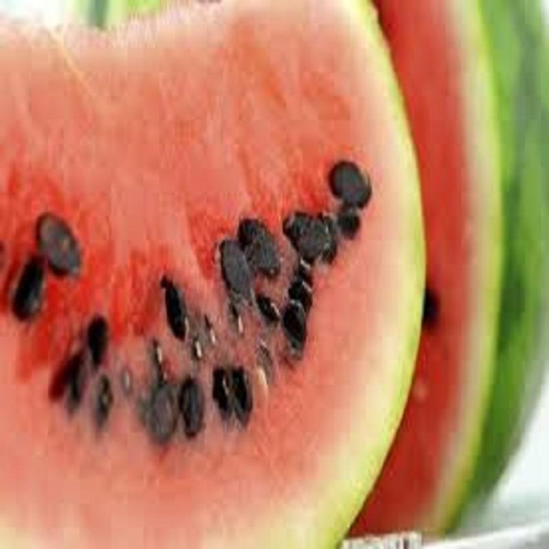 Bulk Melon Water Melon Seeds Available