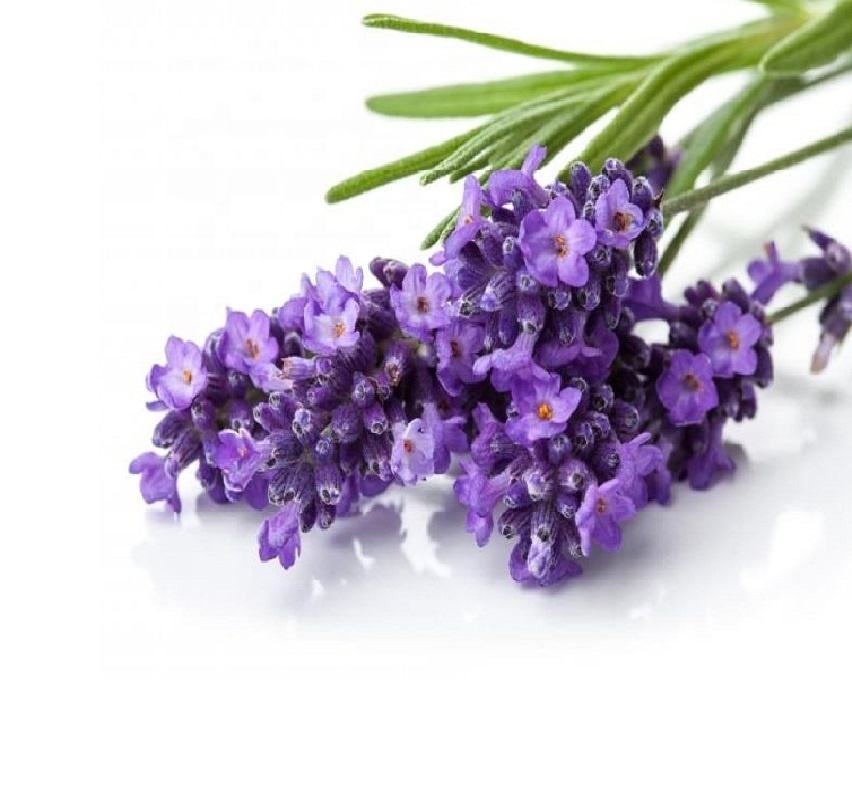 Hot Selling Product | Factory Price | Lavender Essential Oil for Aromatherapy & Cosmetics | 100 ml Aluminium Packing