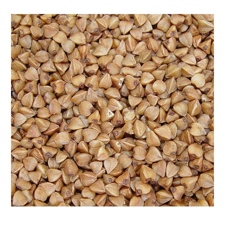 Wholesale supplier 100% High quality cheap rate Bulk Quantity Buckwheat (Fagopyrum)