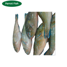 Delicious Frozen Seafood Parrot Fish for Wholesale Purchase