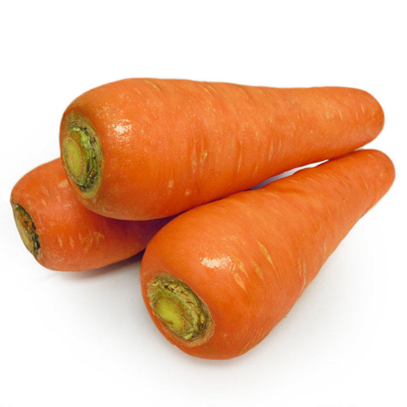 Big Size Fresh Carrots With Good Price for sale