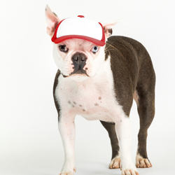Trucker Hats for Dogs (Small)(Red) - unique stylish pet dog hat - patented design