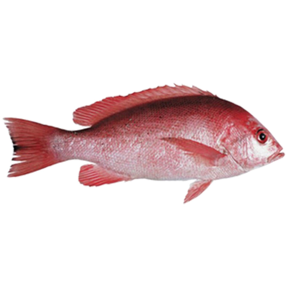 Great Premium Quality Japan and America Red Snapper fish Indonesia