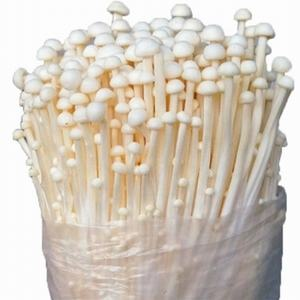 Fresh Grow Bag Enoki Golden Needle Mushroom Spawn