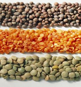 Bulk Canadian Home Grown Best Quality lentils green lentils/ red lentils yellow