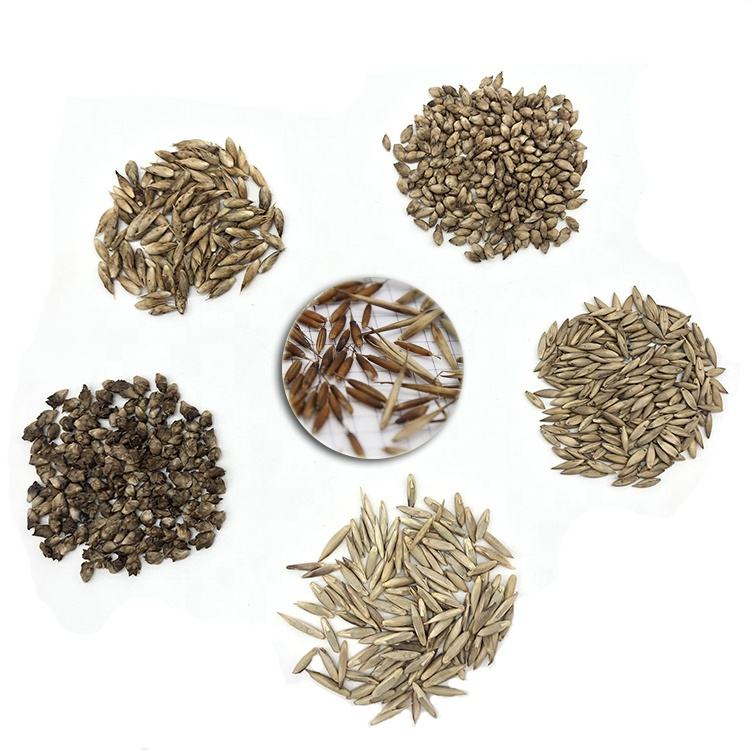 Yunnan Bamboo Seeds Sample Package for New Customer