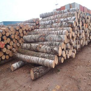 Round White Birch Wood Logs