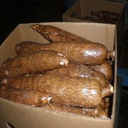 FRESH CASSAVA TUBERS and SWEET TAPIOCA