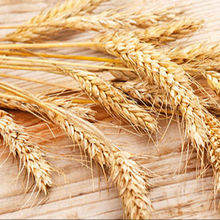 Canadian Quality Durum Wheat/Durum Wheat/Hard Wheat