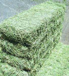 Premium Grade A Alfalfa Hay, Timothy Hay, Animal Feed in South Africa