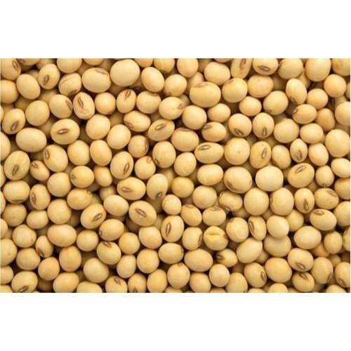 Non GMO Dried High Protein Soybean Seed