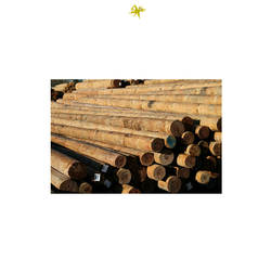 Reliable South African Vendor of Treated Wood Timber Gum Poles at Best Price