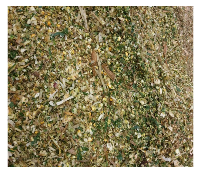 Animal feed - Corn silage with the competitive price and high protein content