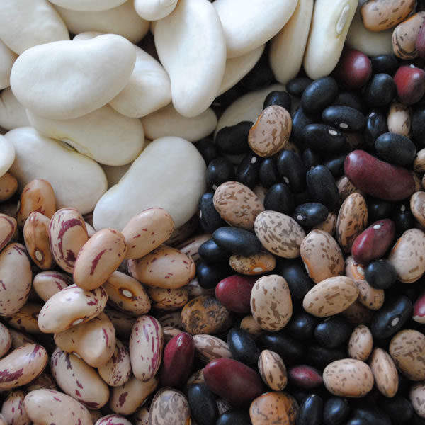 BUTTER BEANS RAW PULSES LIMA BEANS COW PEAS Myanmar Italy Factory