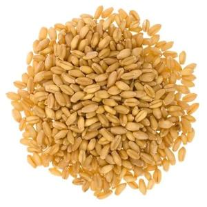 Russian Winter / Spring Soft / Durum Food / Feed Bulk Wheat Grains