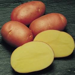 High Export Quality Fresh Asterix Potato from Pakistan