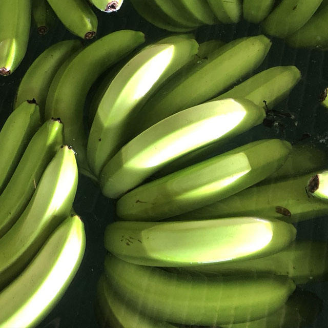 Banana SUPPLIER from PHILIPPINES with good price