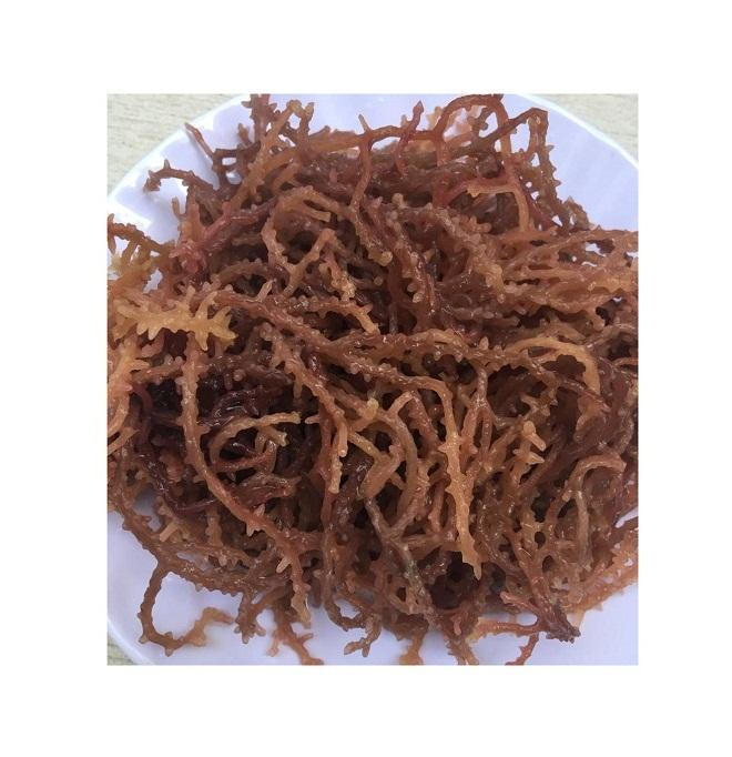 WILDCRAFTED SEA MOSS SEAWEED FROM VIETNAM (Pita Khooi +84 79798481)