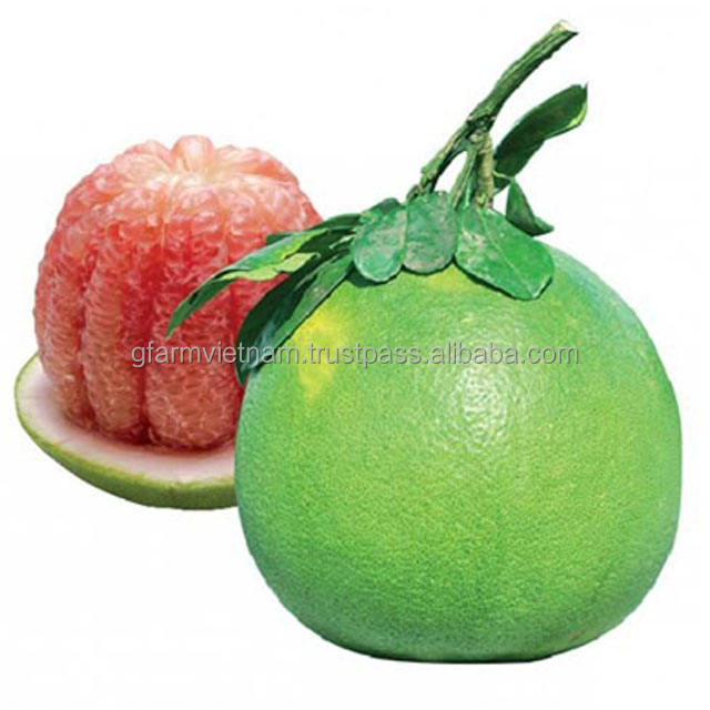 Season 2019 newest Green skin pomelo grapefruit from Vietnam