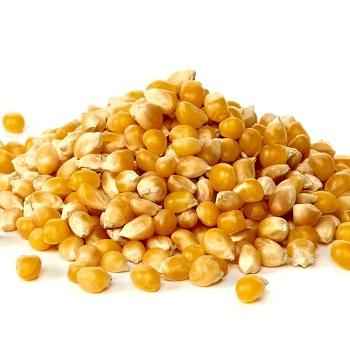 Top Grade 1 Yellow Corn & White Corn/Maize for Human & Animal Feed