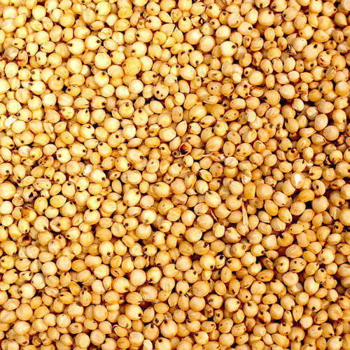 High Grain sorghum at wholesale