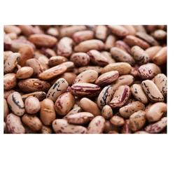 Pinto Beans best price Wholesale