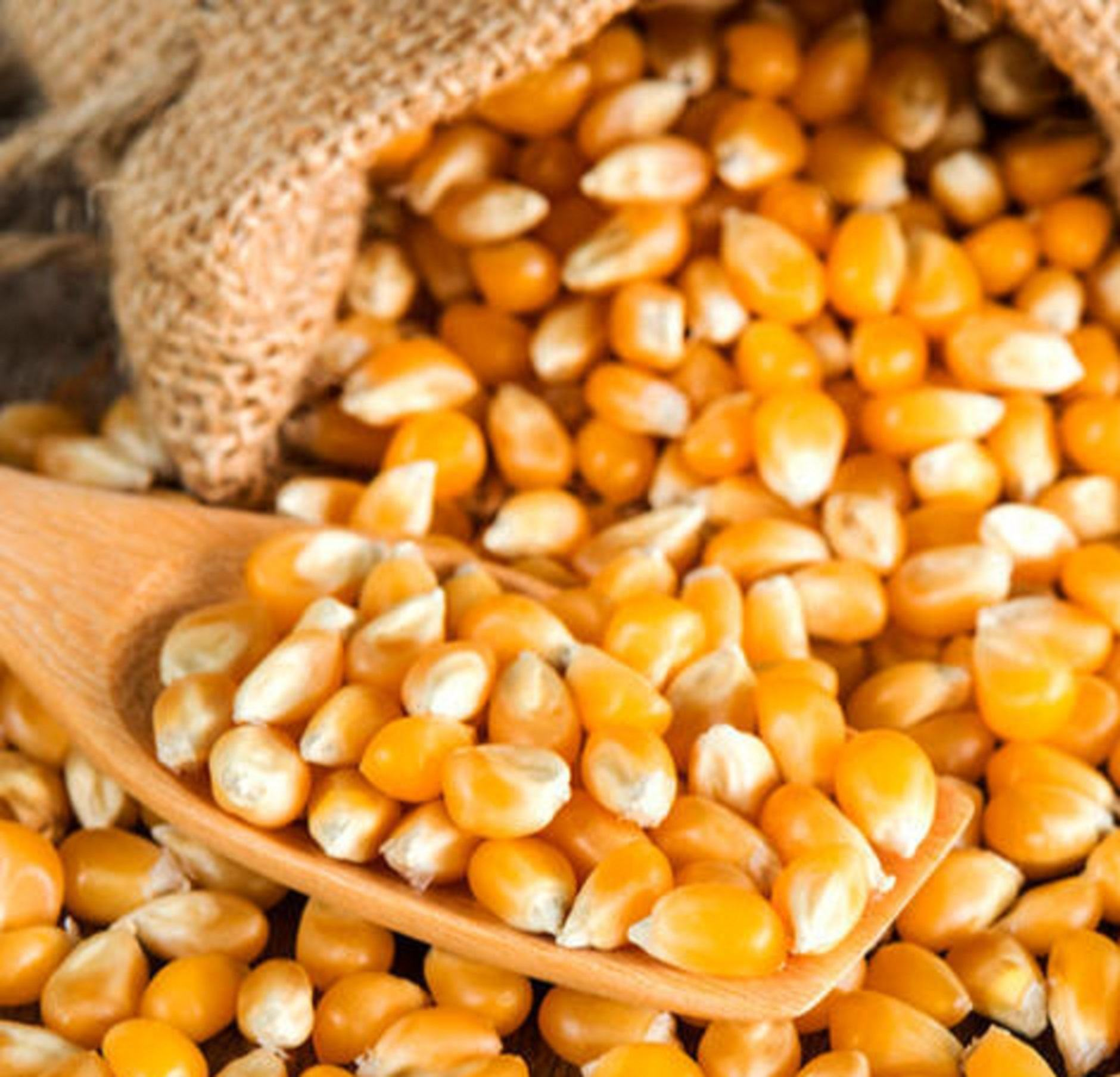 Wholesale Canned Yellow Corn & White Corn/Maize for Human & Animal Feed