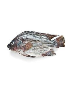 Vietnam Seafood Supplier Frozen Black Tilapia / Frozen Red Tilapia Fish with good price whatsapp-Kakaotalk