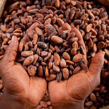 High Grade Sun Dried Cocoa Beans