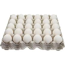 FARM FRESH CHICKEN EGGS FROM INDIA