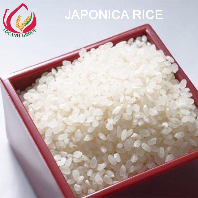 Vietnam rice supplier cheapest wholesale 5% Broken Japonica Rice 2020