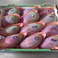 Fresh Egyptian mango